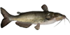 channel-catfish-icon