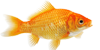 goldfish-icon
